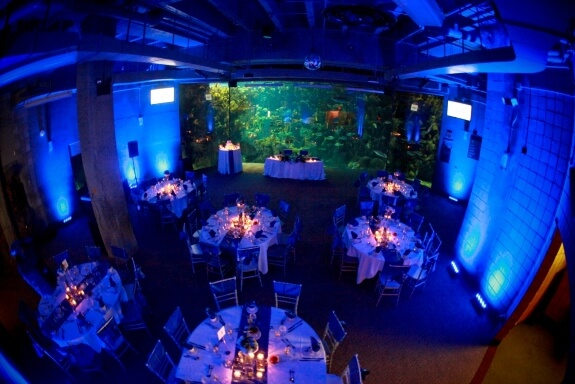 Florida Aquarium Tropical Wedding Ideas Tank Reception E