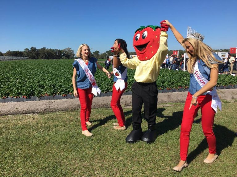 Wish Farms Strawberry Picking Challenge Queen