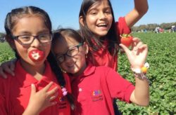 4th Annual Wish Farms Strawberry Picking Challenge
