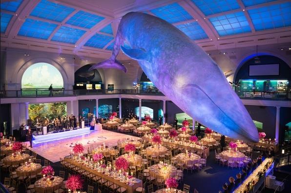 Gainesville Wedding Venue Florida Museum Natural History 2