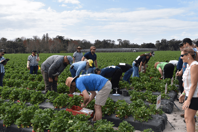 wish farms 2019 strawberry picking challenge chair affair